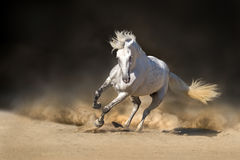 Biały andalusian koń Obrazy Royalty Free