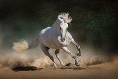 Biały andalusian koń Obraz Royalty Free