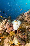 Biały anemon i tropikalna rafa w Czerwonym morzu. zdjęcie stock