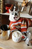 Biały błękitnooki kot ubierał w pasiastym puloweru oblizaniu otaczającym kawowymi akcesoriami Kawa z Batożącą śmietanką Obrazy Stock