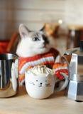 Biały błękitnooki kot ubierał w pomarańcze paskującym pulowerze Kawa z batożącą śmietanką w filiżance w postaci kota w przedpolu Obraz Stock