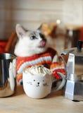 Biały błękitnooki kot ubierał w pomarańcze paskującym pulowerze Kawa z batożącą śmietanką w filiżance w postaci kota w przedpolu Fotografia Stock