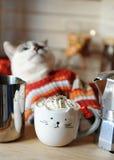 Biały błękitnooki kot ubierał w pomarańcze paskującym pulowerze Kawa z batożącą śmietanką w filiżance w postaci kota w przedpolu Zdjęcia Royalty Free