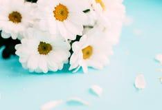 biały błękitny tło kwiaty Obrazy Stock