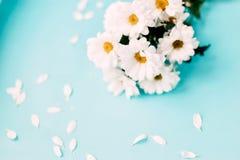biały błękitny tło kwiaty Obraz Stock