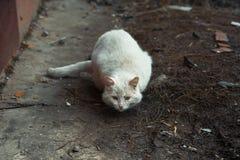 Biały bezdomny kot zdjęcia stock