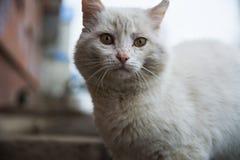 Biały bezdomny kot zdjęcie stock