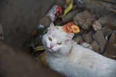 Biały bezdomny kot zdjęcia royalty free