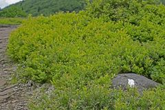 Biały blask Appalachian ślad krzyżuje Dereszowatą górę Fotografia Stock