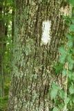 Biały blask na Appalachain śladzie Obraz Stock