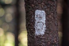 Biały blask na Appalachian śladzie Horyzontalnym Zdjęcie Stock