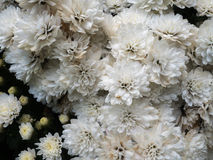 biały czarny tło kwiaty Obrazy Stock