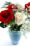 biały czerwone róże Zdjęcia Stock