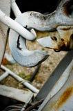 Biały dźwignika haczyk Zdjęcie Royalty Free
