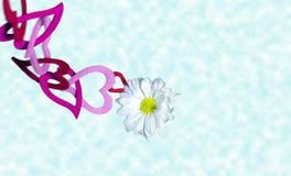 Biały delikatny kwiat wysoki nad chmury pętać łańcuch obraz royalty free