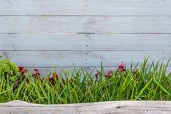 Biały drewno z trawą i bagażnikiem obrazy royalty free