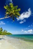 Biały drzewko palmowe i piasek zdjęcie stock