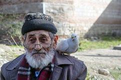 Biały dziad, Brodaci gołębie życzliwi i Fotografia Stock