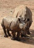 Biały dziecko i nosorożec Obrazy Stock