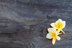 Biały frangipani na starym drewnie fotografia royalty free