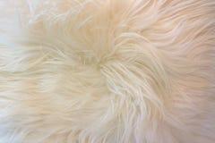 Biały futerkowy tło Obrazy Stock