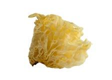 Biały galaretowy grzyb zdjęcie royalty free