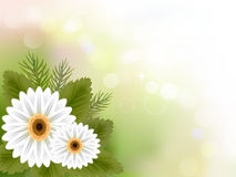 Biały gerbera kwiatu tło Fotografia Stock