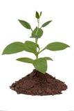 biały glebowi tło drzewa Obrazy Stock