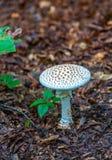 Biały grzyb w lesie fotografia royalty free