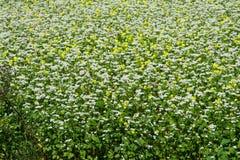 Biały i żółci kwiaty Obraz Stock