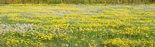 Biały i żółty łąkowy tło Obrazy Stock