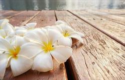 Biały i żółty plumeria kwitnie na starej drewnianej podłoga Fotografia Stock
