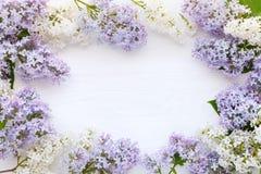 Biały i purpurowy bez na białym drewnianym tle Fotografia Stock