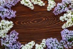 Biały i purpurowy bez na ciemnego brązu drewna tle Obraz Royalty Free
