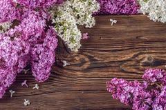 Biały i purpurowy bez na drewnianym tle, miejsce dla teksta, wiosny kwitnienia roślina Zdjęcie Stock
