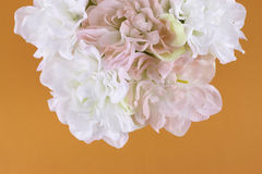 Biały i różowi kwiaty Fotografia Stock