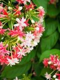 Biały i różowy bukiet z miękkim ostrości tła zieleni liściem Zdjęcie Stock
