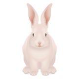 Biały i różowy Szczęśliwy Wielkanocny królik odizolowywał - realistycznego Obrazy Royalty Free