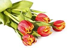 biały jaskrawy bukietów tulipany obrazy royalty free