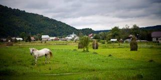 Biały koń na zielonej trawie Zdjęcia Stock