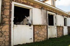 Biały koń w stajni Obraz Stock