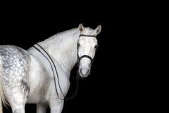 Biały Koński portret Zdjęcie Stock