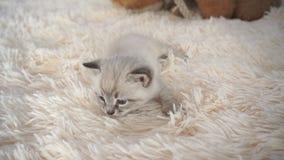 biały kociak śpi powszechnej zdjęcie wideo