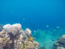 Biały koral na tropikalnym dennym dnie Błękitna rafa koralowa i woda morska Obraz Royalty Free