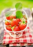 biały koszykowe świeże małe truskawki Fotografia Stock