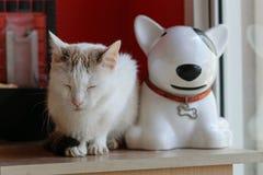 Biały kot i biały ceramiczny pies siedzimy blisko okno obrazy royalty free