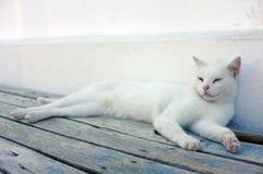 Biały kot kłaść w dół Fotografia Royalty Free
