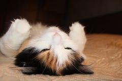 Biały kot kłama na plecy na łóżku zdjęcia stock