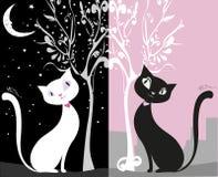 Biały kot na czarnym nocnym niebie, czarnego kota dzień w mieście, Fotografia Stock