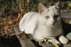 Biały kot na starego obierania parkowej ławce pod drzewem Fotografia Royalty Free